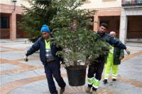 Unos operarios retiran un árbol de navidad el pasado mes de enero