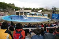 Los alumnos disfrutaron con la exhibición de delfines